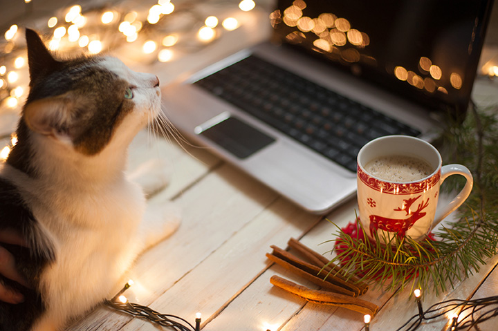 Freelancer's working place at home decorated for Christmas holiday. Cat sitting on the table.